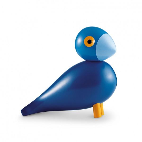 Singvogel Kay