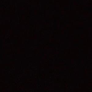 Birke schwarz
